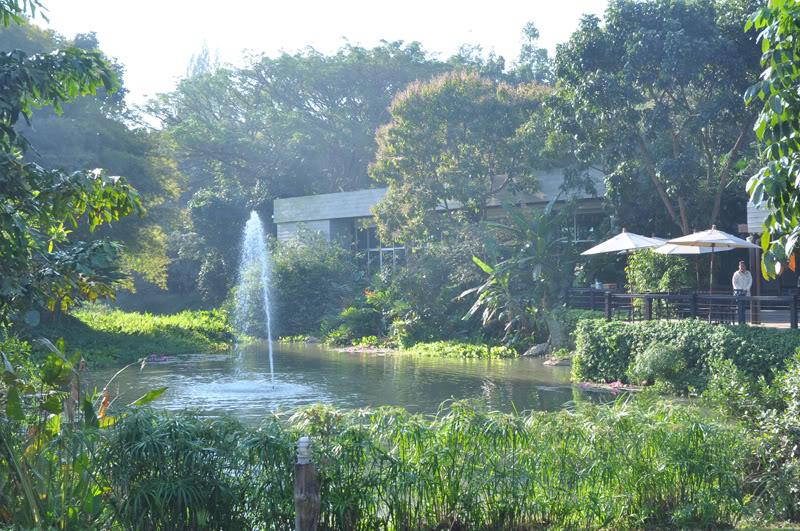 Cam-Lao-Thai564.jpg
