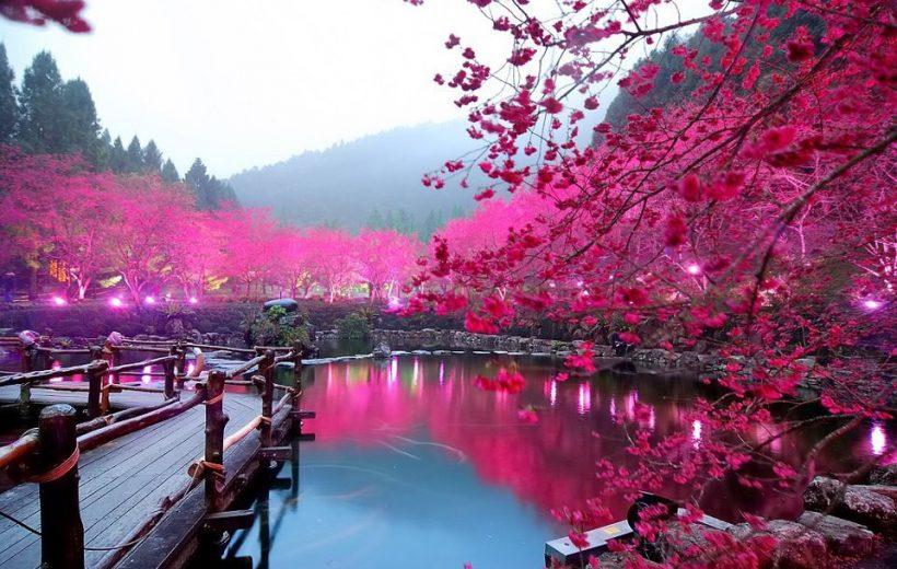 Cho những người lần đầu du lịch Nhật