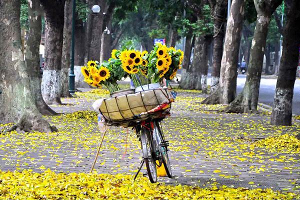Dịu dàng mùa thu Hà Nội