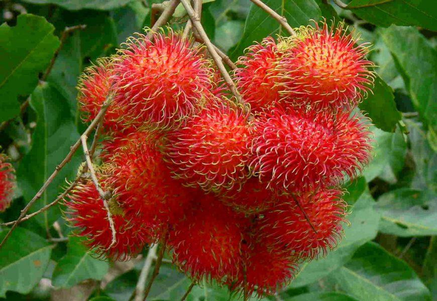 Những thiên đường trái cây bạn có thể đi về trong ngày từ TP.HCM