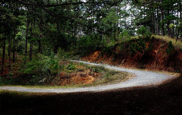 Những con đường xuyên rừng đẹp như tranh