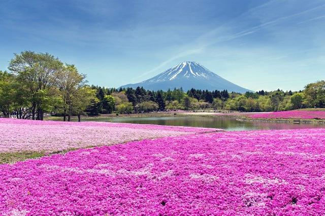 Những cánh đồng hoa xuân trên khắp thế giới