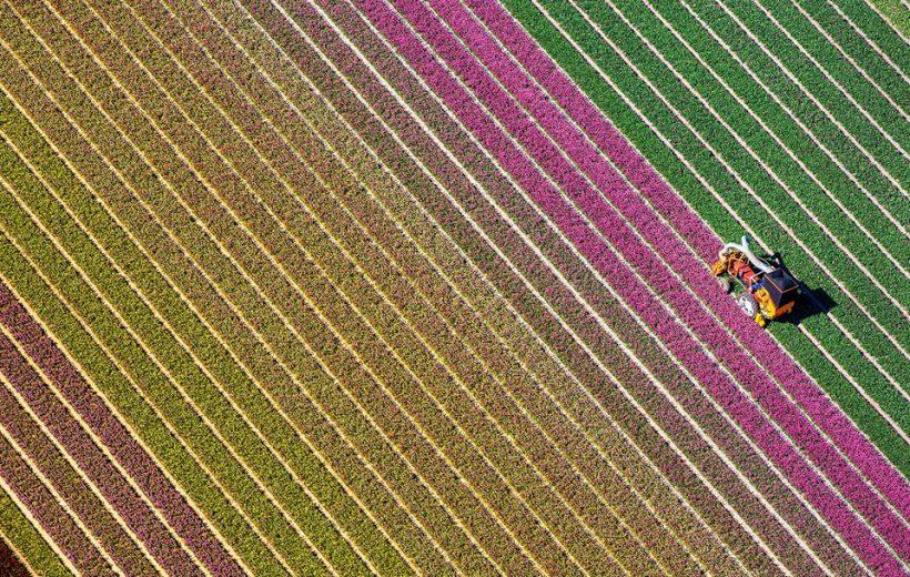 Những Cánh Đồng Hoa Xuân Khắp Thế Giới