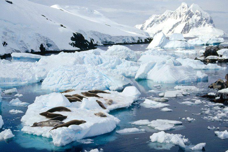 Những loài vật dễ thương trên lục địa lạnh nhất hành tinh