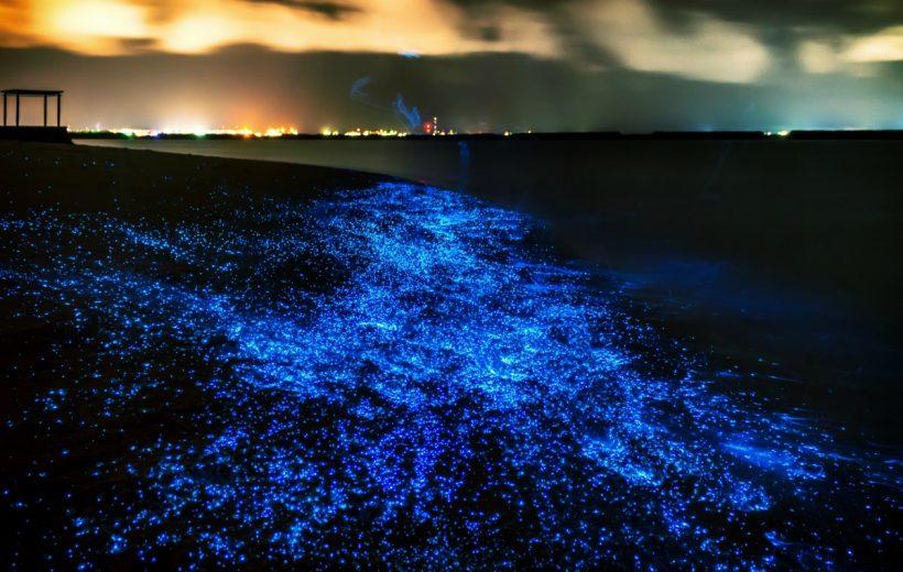 Kỳ diệu tôm phát quang bên bờ biển ở Nhật Bản