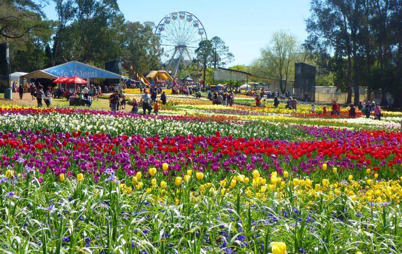 Nàng xuân Floriade từ T9-T11, Australia