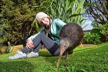 Kiwi-Bird-Whangarei