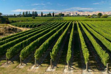 marlborough-wine-region
